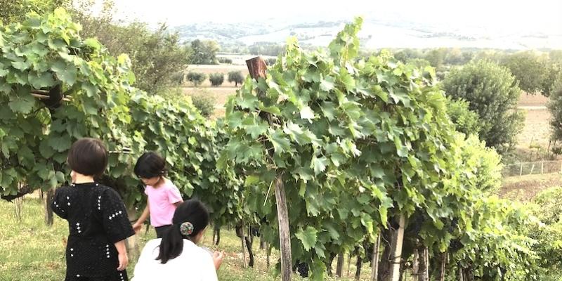 ロマーニャ地方のワインはサンジョヴェーゼ